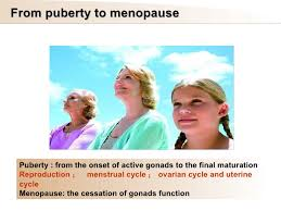 puberty-to-menopause