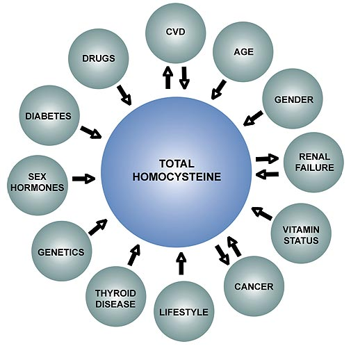 Homocysteine One Of Your Most Important Health
